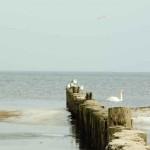 Штеттинский залив
